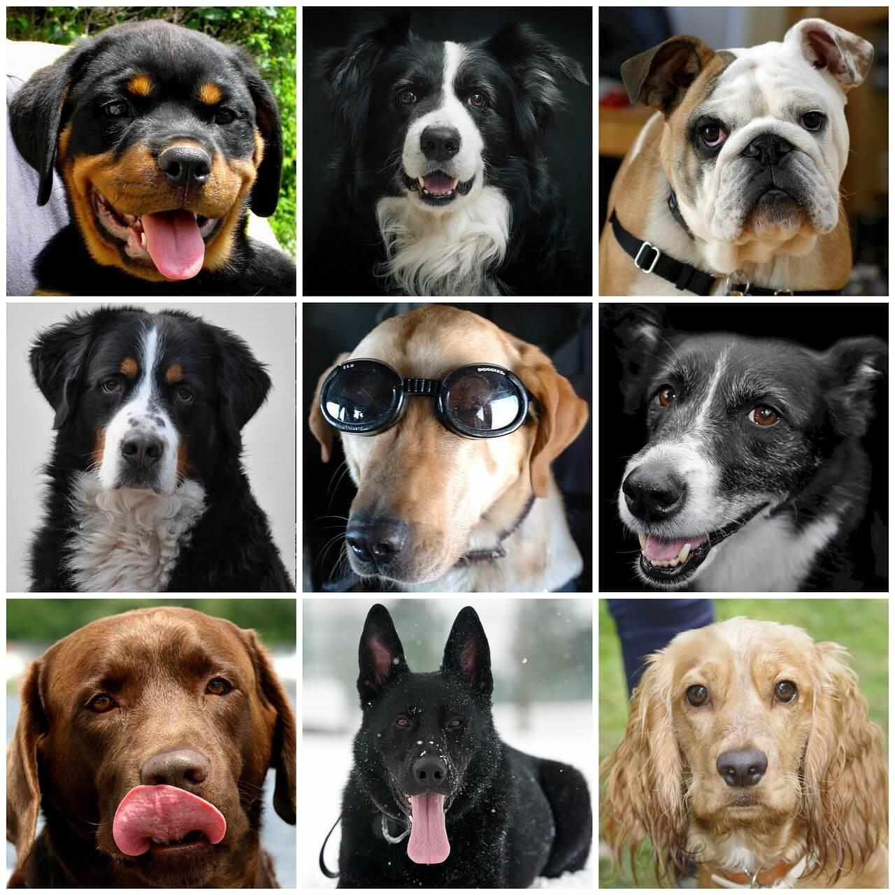 Картинки с породами собак и название этих собак, пусть сбываются мечты