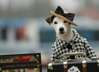 pes v palto