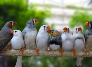 soderzhanie-komnatnykh-ptic