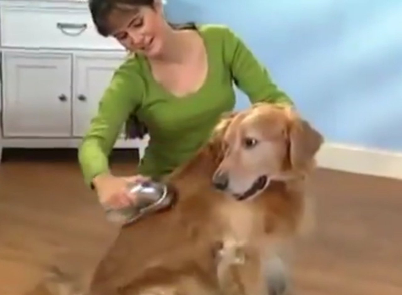 вычесывать собаку